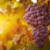 Cómo dejar de poner vino nuevo en odres viejos, significado de Marcos 2:22, Cuál es el significado de dejar de poner vino nuevo en odres viejos
